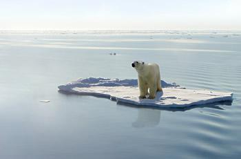 Jääkaru hulpival jääpangal